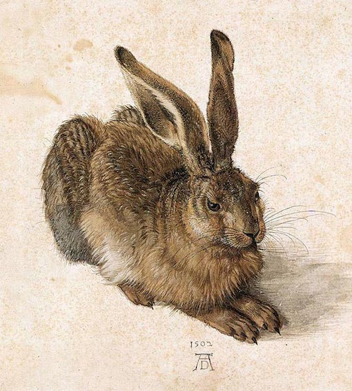 Types of paint water color Durer_Young_Hare (1)