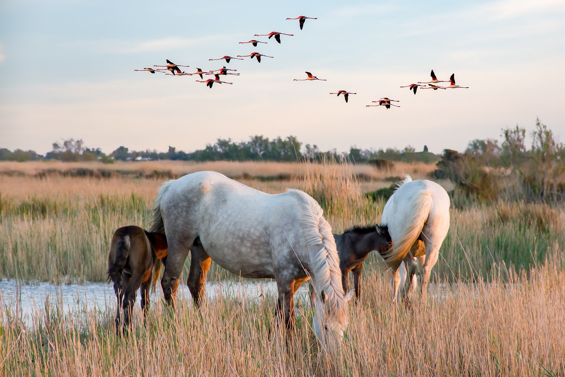 Camargue Horses and Pink Lakes - Exploring the Stunning Camargue and Aigues Mortes