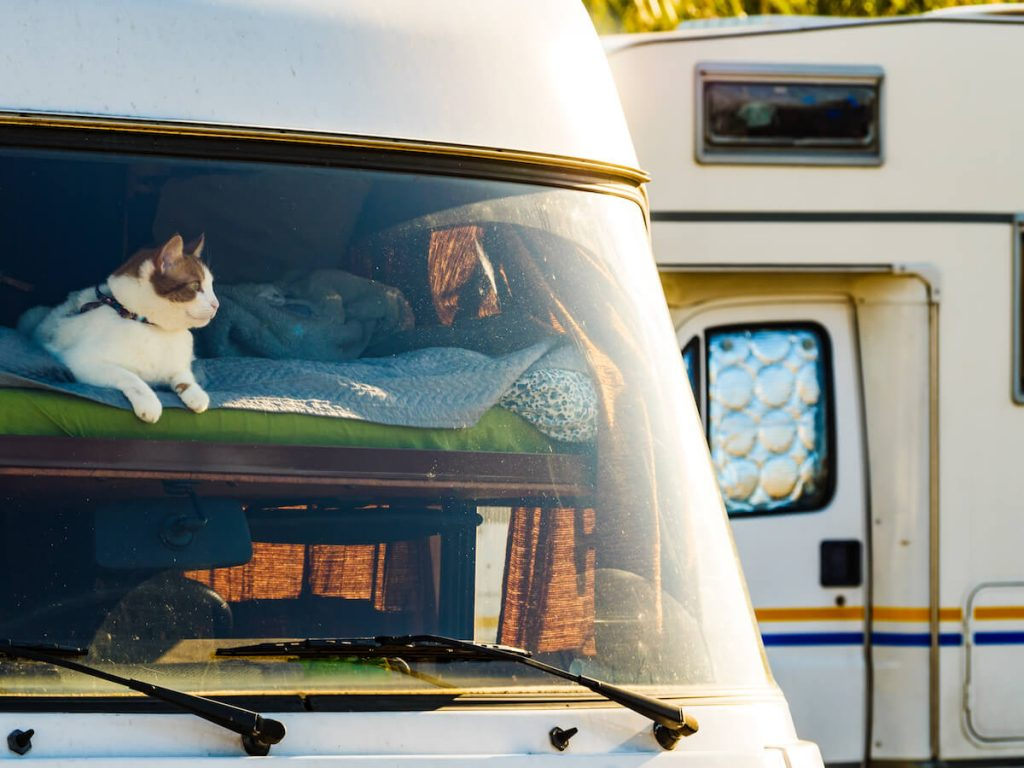 vanlife with cats pets dogs other pets