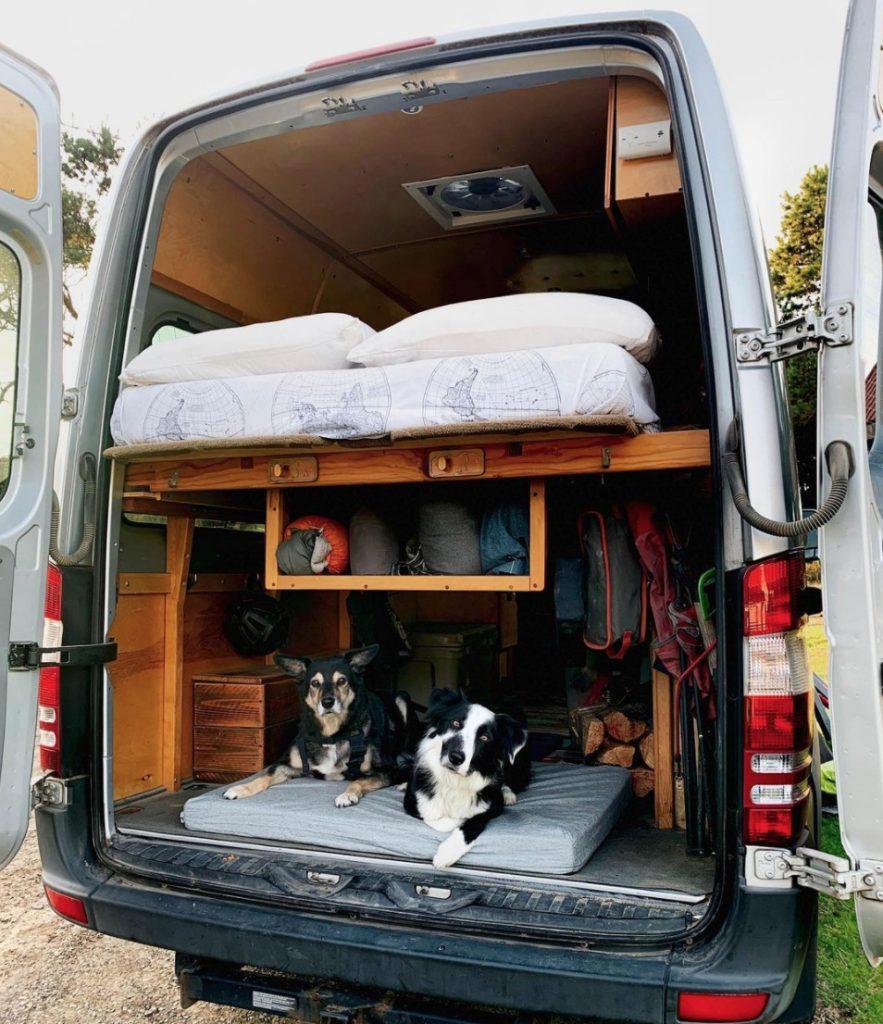 Arlo and Finn vanlife dogs laducb