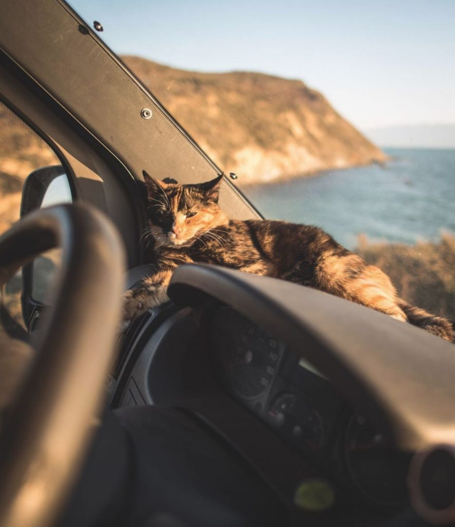 Millie vanlife cat - curly hair camping